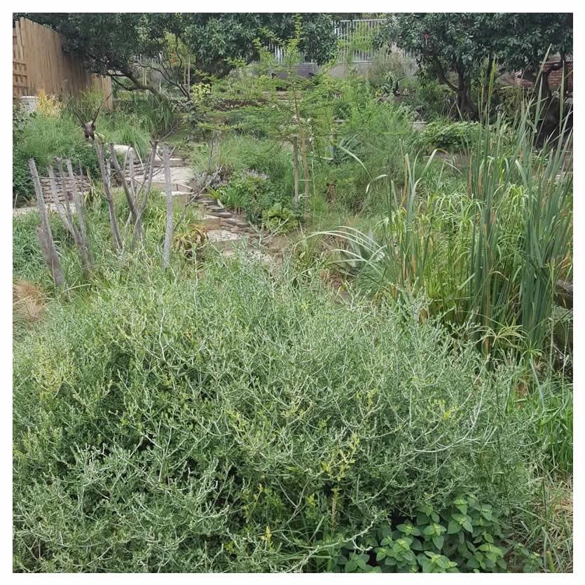 Garden from the bottom