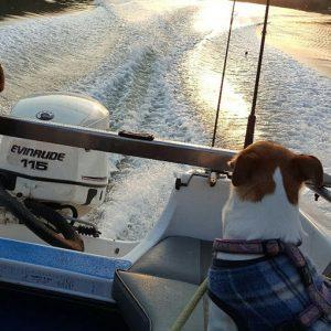 Boating at Hillscapes